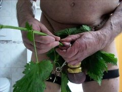 self cbt with nettles cock and peehole sounding